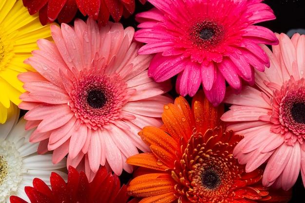 Close-up di margherite multicolori gerbera Foto Gratuite