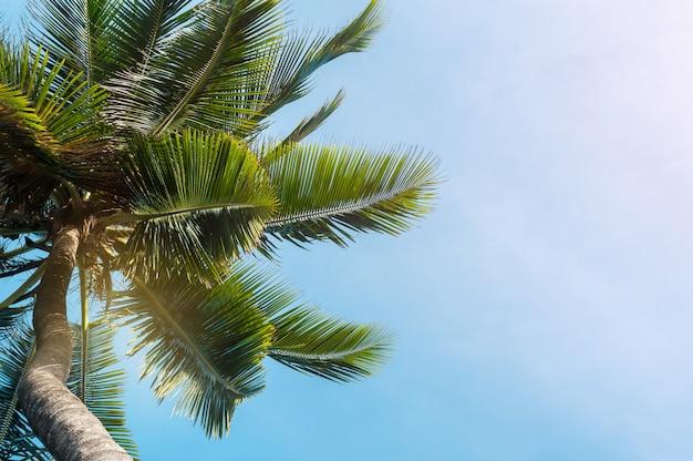 Cocchi sul fondo del cielo blu Foto Premium