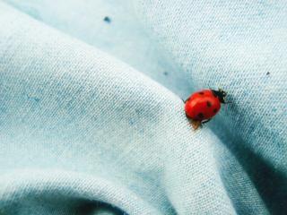 Coccinella insetto scaricare foto gratis - Coccinella foto gratis ...