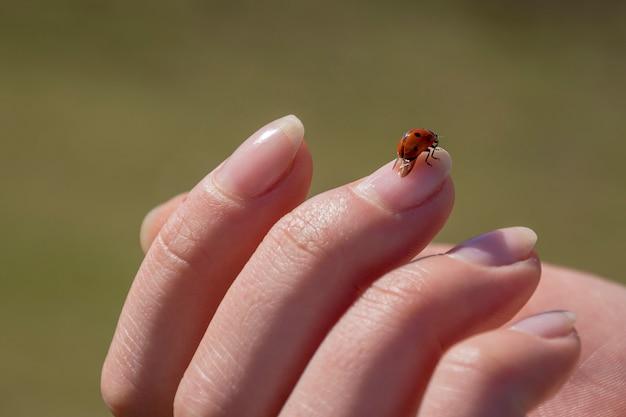 Coccinella piacevole che si siede sul dito della donna Foto Premium