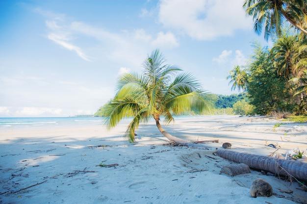 Cocco sulla spiaggia. Foto Premium