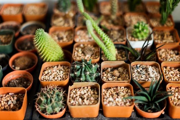 Collezioni cactus secchi pietre secchi di organismi Foto Gratuite