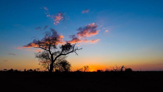 Colorato tramonto nel bush Foto Premium