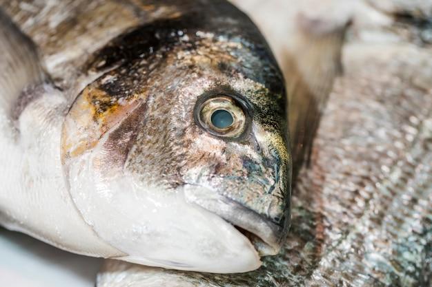 Colpo a macroistruzione del pesce congelato in negozio Foto Gratuite