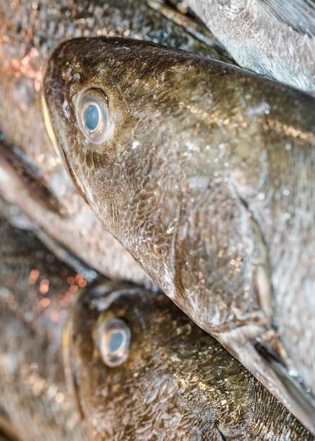 Colpo a macroistruzione di pesce fresco Foto Gratuite
