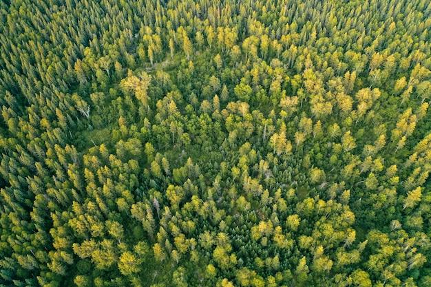 Colpo aereo ambientale del fuco di bella foresta spessa durante il giorno soleggiato Foto Gratuite