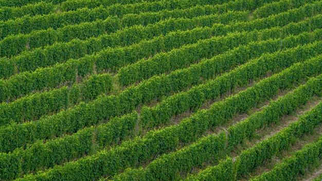 Colpo alto angolo di un campo di alberi verdi appena piantati - perfetto per un articolo sulla vinificazione Foto Gratuite