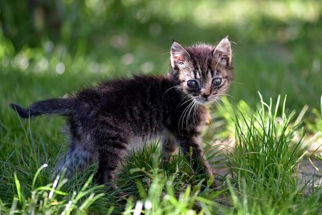 Colpo del fuoco selettivo del primo piano di un gattino sveglio con gli occhi espressivi tristi Foto Gratuite