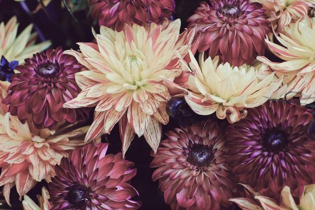 Colpo del primo piano di una bella composizione floreale con fiori colorati di dalia Foto Gratuite
