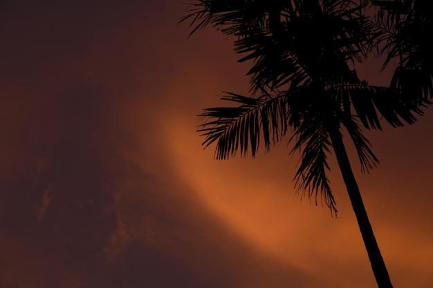 Colpo del primo piano di una palma sottile durante il tramonto in gili air-lombok, indonesia Foto Gratuite