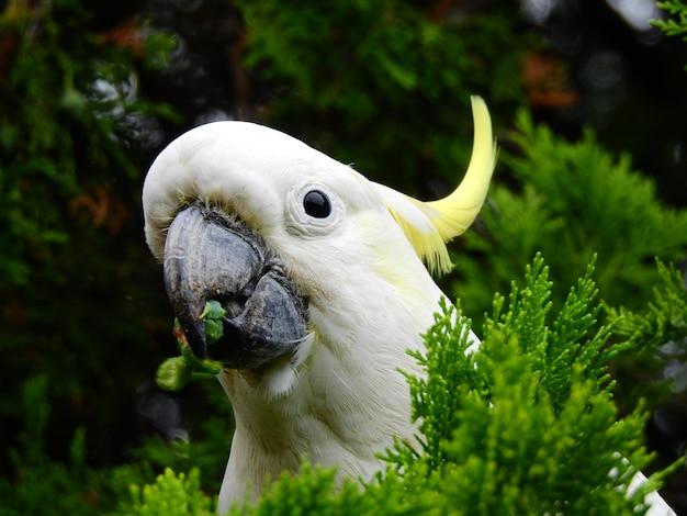Colpo del primo piano di una testa di un bellissimo cacatua zolfo-crestato con uno sguardo carino tra alcune piante Foto Gratuite