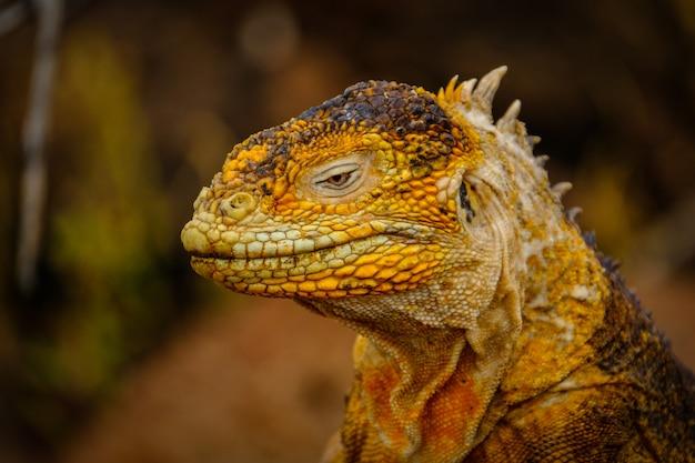Colpo del primo piano di una testa di un'iguana gialla Foto Gratuite