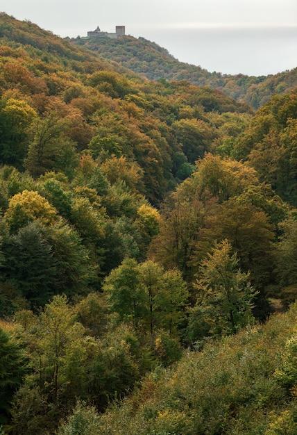 Colpo di alto angolo di una foresta verde dell'albero durante il giorno Foto Gratuite