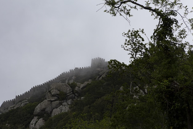 Colpo di angolo basso di un bellissimo castello su una scogliera nebbiosa sopra gli alberi Foto Gratuite