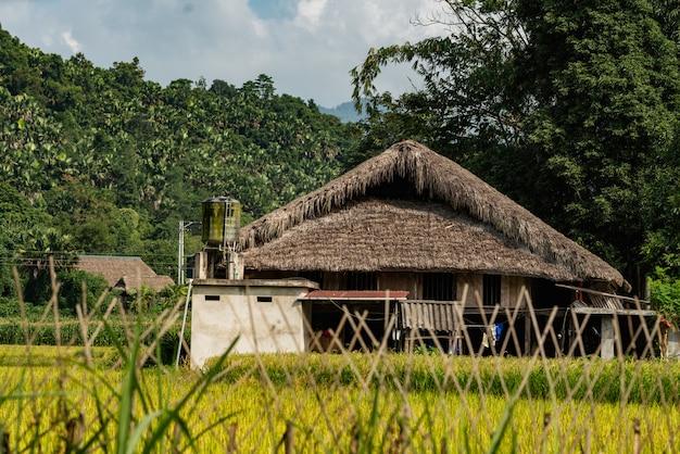 Colpo di angolo basso di una costruzione di legno in una foresta dell'albero nel vietnam sotto il cielo nuvoloso Foto Gratuite