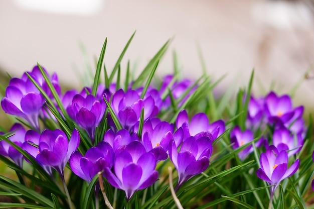 Colpo di messa a fuoco selettiva di fiori bianchi e viola Foto Gratuite