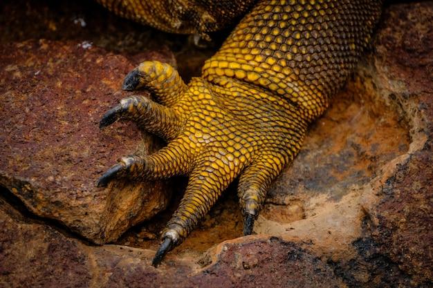 Colpo estremo del primo piano della gamba di un'iguana gialla Foto Gratuite