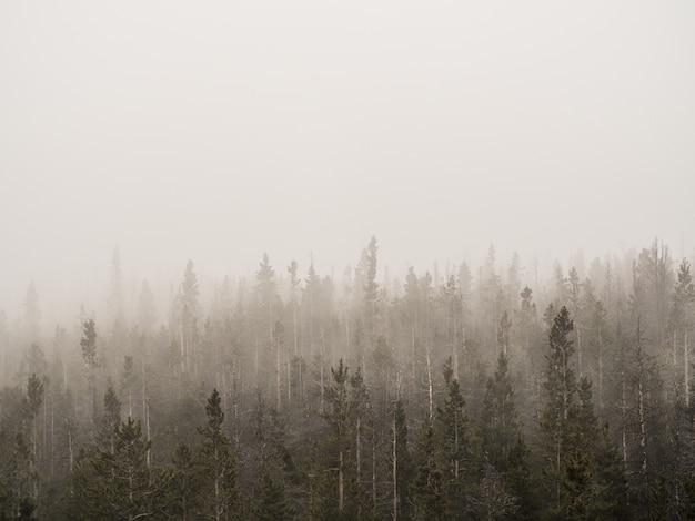 Colpo orizzontale di una foresta nebbiosa con alberi ad alto fusto coperto di nebbia Foto Gratuite