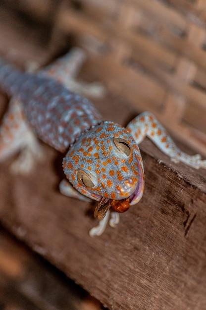 Colpo verticale del primo piano di una lucertola messa un colletto comune che mangia una libellula su una superficie di legno Foto Gratuite