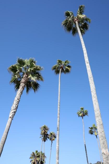 Colpo verticale di angolo basso di molte palme alte sotto il cielo Foto Gratuite