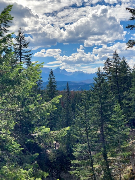 Colpo verticale di bella foresta con molti abeti sotto il cielo nuvoloso Foto Gratuite