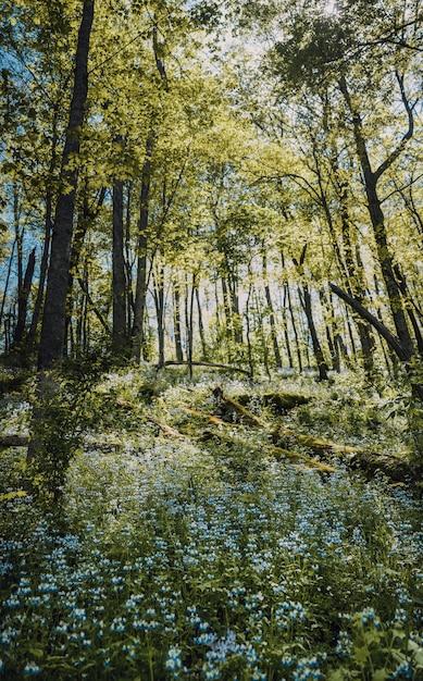 Colpo verticale di un campo di fiori blu con foglie verdi nella foresta di alberi Foto Gratuite