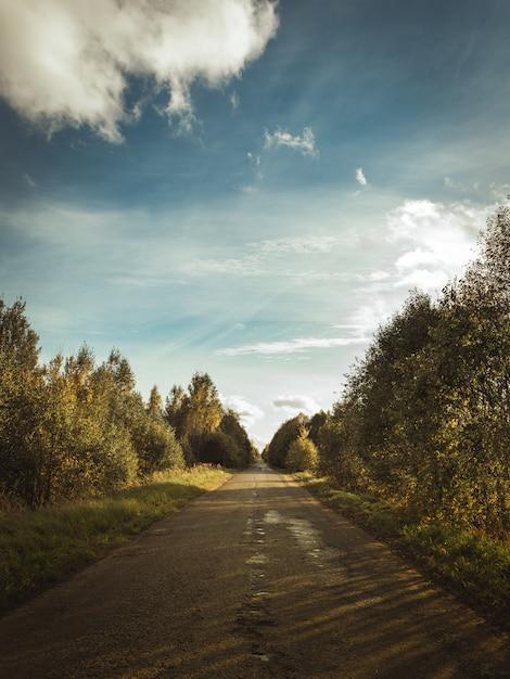 Colpo verticale di un percorso nella foresta coperto con le ombre delle nuvole nel cielo soleggiato Foto Gratuite