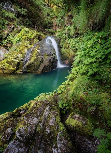 Colpo verticale di una bellissima laguna circondata da rocce muschiose e la foresta di skrad, croazia Foto Gratuite