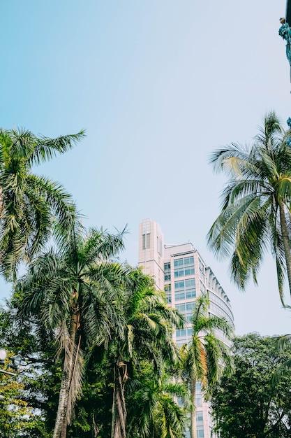 Colpo verticale di una costruzione dietro le belle palme alte sotto il cielo blu Foto Gratuite
