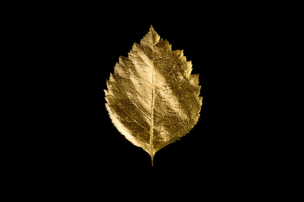 Composizione autunnale di diverse foglie e lettere d'oro Foto Premium
