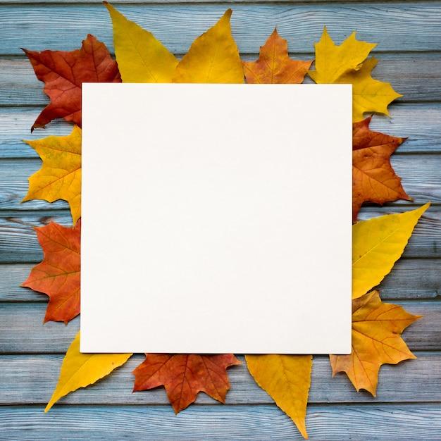 Composizione autunnale di foglie di acero e carta bianca quadrata. vista piana, vista dall'alto Foto Premium