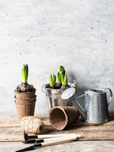 Composizione con giacinti in secchio di zinco e attrezzi da giardino sul tavolo di legno rustico. Foto Premium
