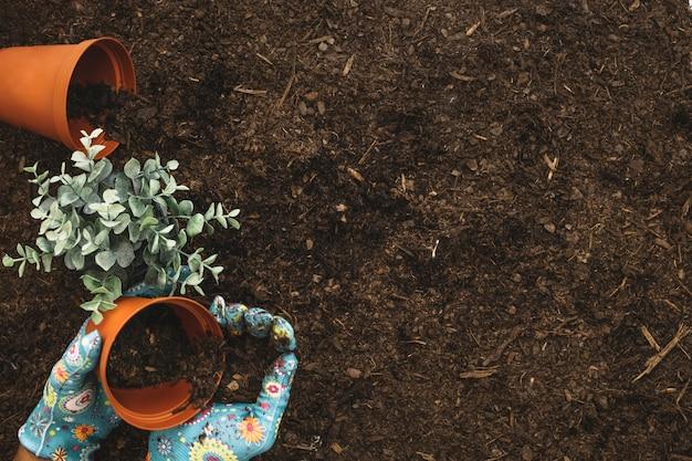 Composizione giardinaggio con vasi da fiori e spazio sulla for Giardinaggio e fiori