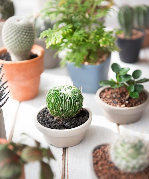 Concetto ambientale di conservazione della natura del vaso dell'albero della pianta del cactus Foto Gratuite