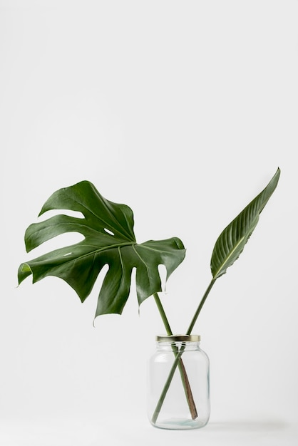 Concetto botanico di vista frontale con lo spazio della copia Foto Gratuite