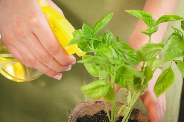 Concetto della gente, di giardinaggio, di piantagione di fiori e di professione - vicino su della piantatura delle mani del giardiniere o della donna Foto Premium