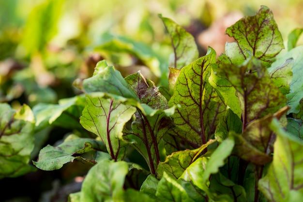 Concetto di agricoltura di piante biologiche Foto Gratuite