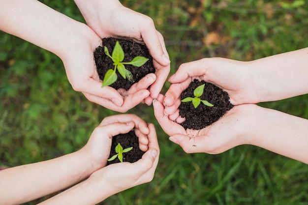 Concetto di eco con le mani che tengono piccole piante Foto Gratuite
