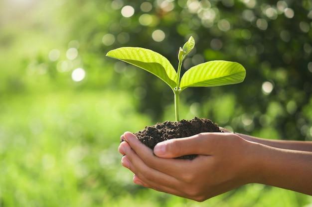 Concetto di giorno della terra eco. mano che tiene la pianta giovane in sole e natura verde Foto Premium