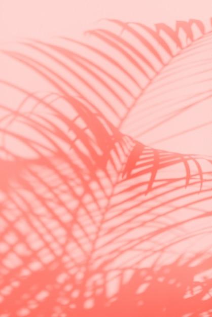 Concetto di viaggio estivo. ombra di sfondo di foglie di palma esotiche Foto Premium