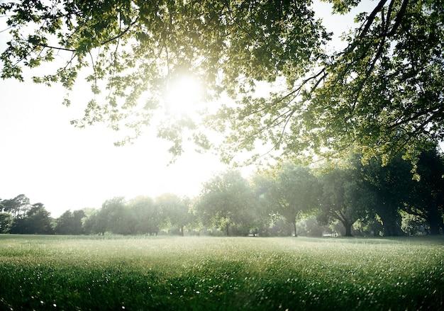Concetto scenico dell'ambiente verde del parco del campo Foto Gratuite