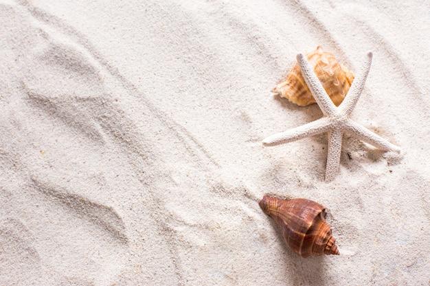 Conchiglie Di Mare Con Sabbia Come Sfondo E Copyspace Concetto