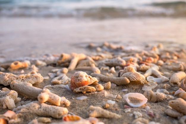 Conchiglie E Frammenti Di Corallo Sulla Spiaggia Di Sabbia Mare