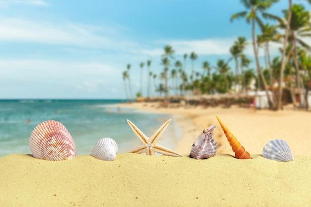 Conchiglie e stelle sulla sabbia chiara della spiaggia con accessori Foto Premium