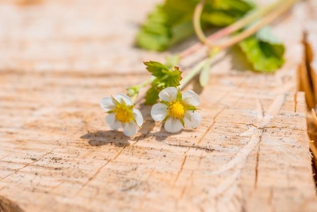 Confine di fragole fresche con crescenti corridori e fiori. su fondo in legno vecchio Foto Premium