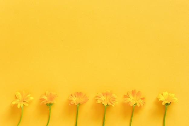 Confine realizzato con fiori di calendula arancio su sfondo giallo. concetto ciao primavera o estate Foto Premium