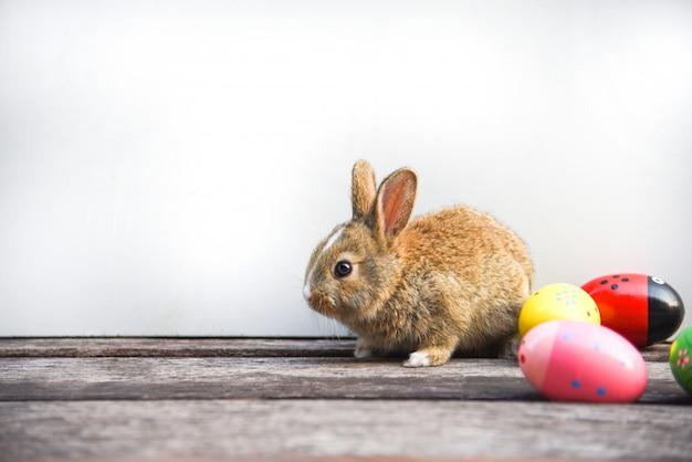 Coniglietto di pasqua e uova di pasqua su sfondo grigio Foto Premium
