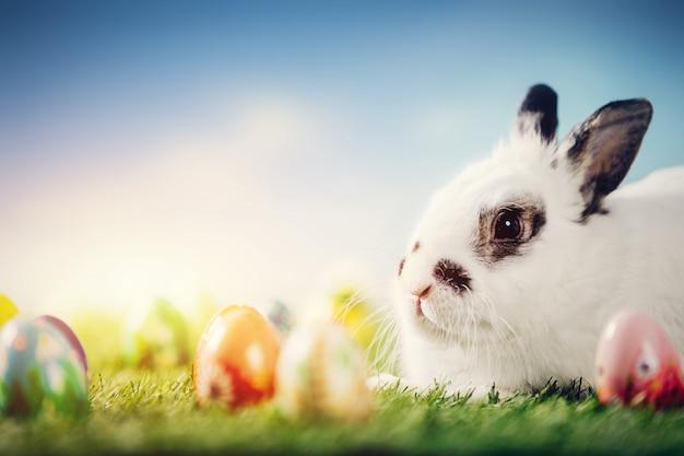 Coniglio bianco e uova di pasqua su sfondo di primavera. Foto Premium