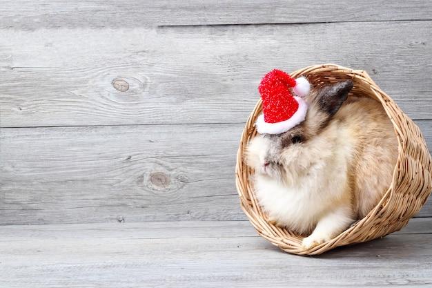 Coniglio bianco peloso bianco, nascosto in un cestino di legno marrone chiaro sulla testa, con indosso un cappello rosso di natale. Foto Premium