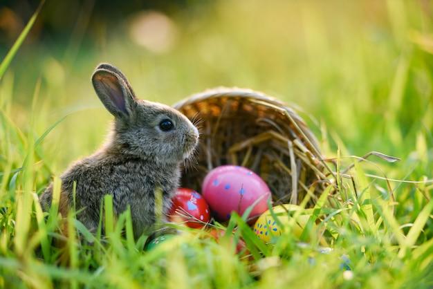 Coniglio del coniglietto di pasqua e coniglio delle uova di pasqua che si siedono sull'erba Foto Premium